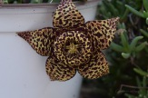 160921_piante-e-fiori_004